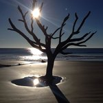 Hunting Island State Park Campgroundの写真