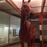 Phar Lap. Amazing museum. So much to see