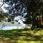 Photo de Lake Crescent Lodge