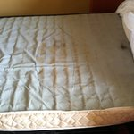 Moldy pull out bed