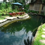 natural swimming pool without any chlorine or other chemicals