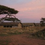 Foto van Serengeti Savannah Camps