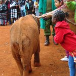 Kids touching the baby elephant