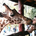 Here we go.. and after the kiss I realized it was a male giraffe.. Oops