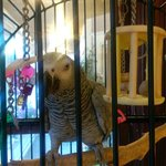 Sophie the African Grey Parrot