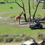 Giraffe view from room