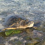 Turtle sunning himself on the shore