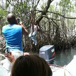 Our tour guide hanging from the mangroves.