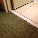 Lovely color carpeting and it's frayed and pets stay in these rooms.