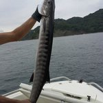 King Mackerel caught