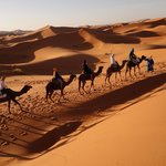 Camel ride in the sahara