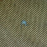 Sample of carpet stains in Beachside Apartments.