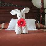 One of the many towel animals the chamber maids made