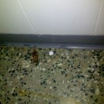 Big roaches were found in the bathroom