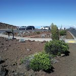 Silversword garden at summit
