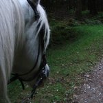On a dreamy white horse, in the dreamy green forest