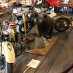 A bear and some motor cycles
