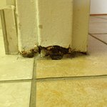Bathroom door threshold