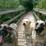 Dogs on the shore trail