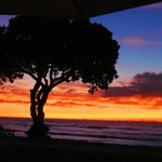 view from the beach tree