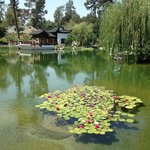 Chinese Garden again at The Huntington