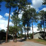 Cool Pines