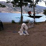 pet friendly sites right on the water