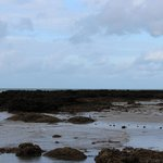 Tide Out and Rock Pooling