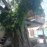 Eden Beach Bungalows Foto