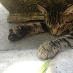 One of the many cats, showing off his toes, snoozing in the sun