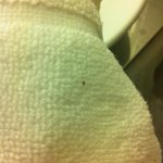 Bed Bugs !!!