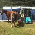 Horses went right in our tent and stole our bread!
