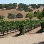 Vines and Trees