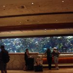 Foto de The Mirage Hotel & Casino