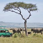 Photo of Samburu Serena Safari Lodge