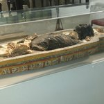 A Mummy from Egypt