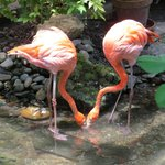 They even have flamingos!