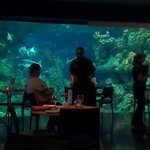 Dining with sharks at the Deep nearby