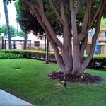 Foto de Courtyard Los Angeles Torrance/South Bay
