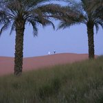 dunes from the property