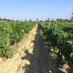 Foto O'Vineyards Bed & Breakfast - Carcassonne