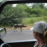 Discover Kruger Private Day Tours