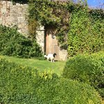 Grounds of Mount Tavy Cottage with Poppy