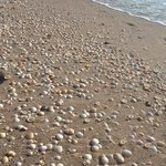 Beautiful shells on the beach !