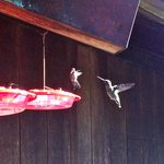 Hummingbird activity