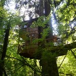 Treehouse Point resmi