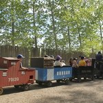Kiddie train goes slowly enough for the parents to be able to follow it