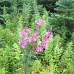 wild flowers on the trail