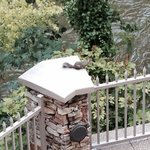 Squirrel on top of post on back patio.