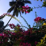 Beautiful flowers and palm trees everywhere